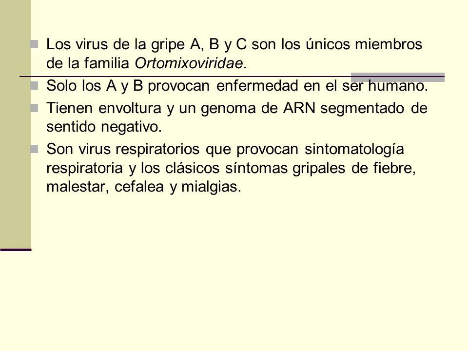 Los virus de la gripe A, B y C son los únicos miembros de la familia Ortomixoviridae.