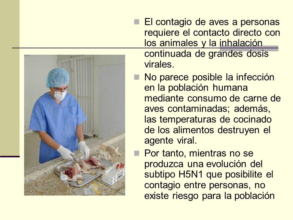 El contagio de aves a personas requiere el contacto directo con los animales y la inhalación continuada de grandes dosis virales.