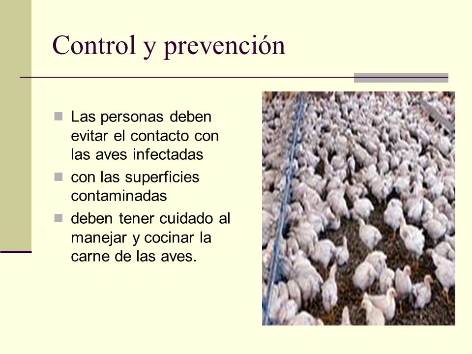 Control y prevención Las personas deben evitar el contacto con las aves infectadas. con las superficies contaminadas.