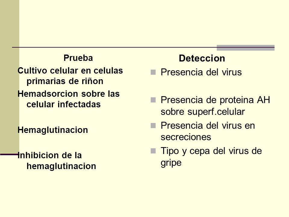 Presencia de proteina AH sobre superf.celular