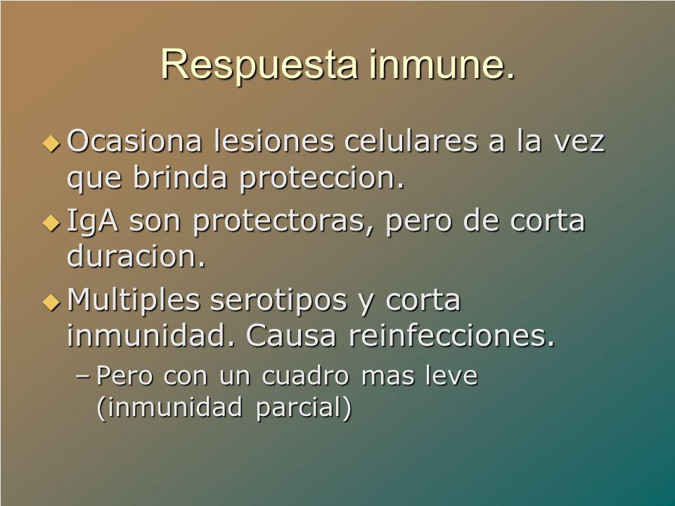 Respuesta inmune. Ocasiona lesiones celulares a la vez que brinda proteccion. IgA son protectoras, pero de corta duracion.