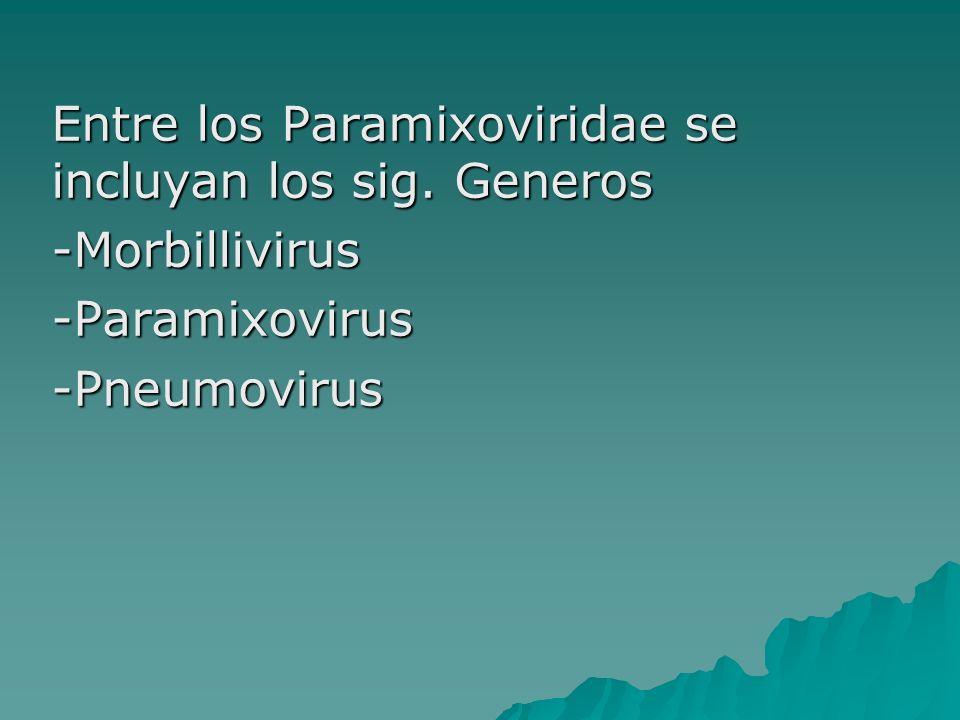 Entre los Paramixoviridae se incluyan los sig. Generos
