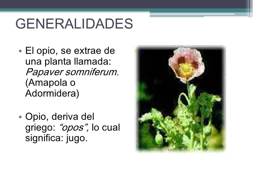 GENERALIDADES El opio, se extrae de una planta llamada: Papaver somniferum. (Amapola o Adormidera)