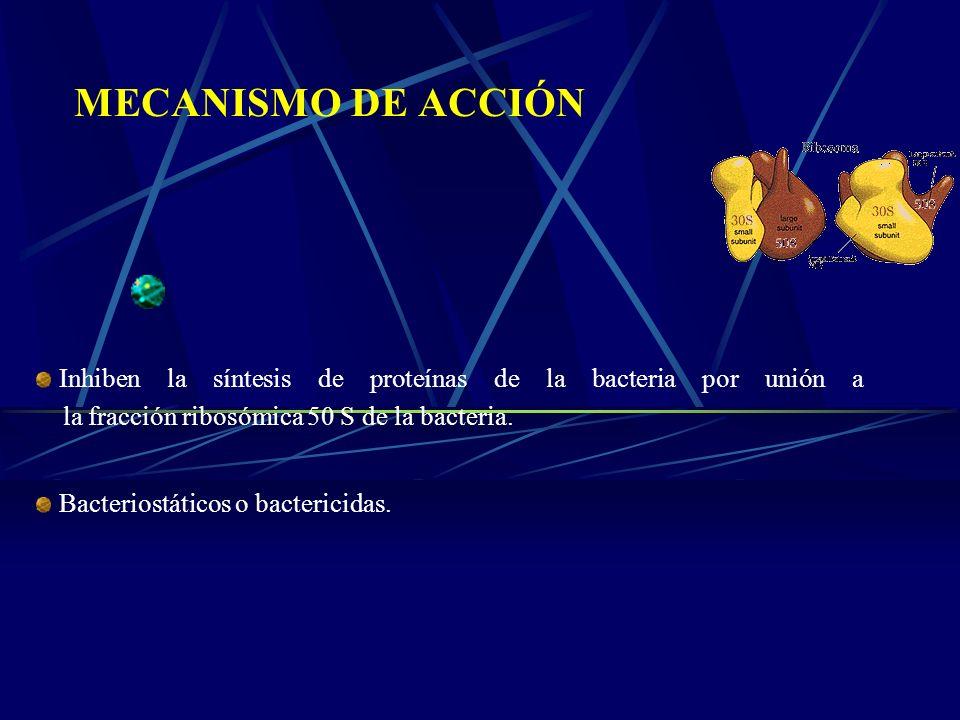MECANISMO DE ACCIÓN Inhiben la síntesis de proteínas de la bacteria por unión a la fracción ribosómica 50 S de la bacteria.