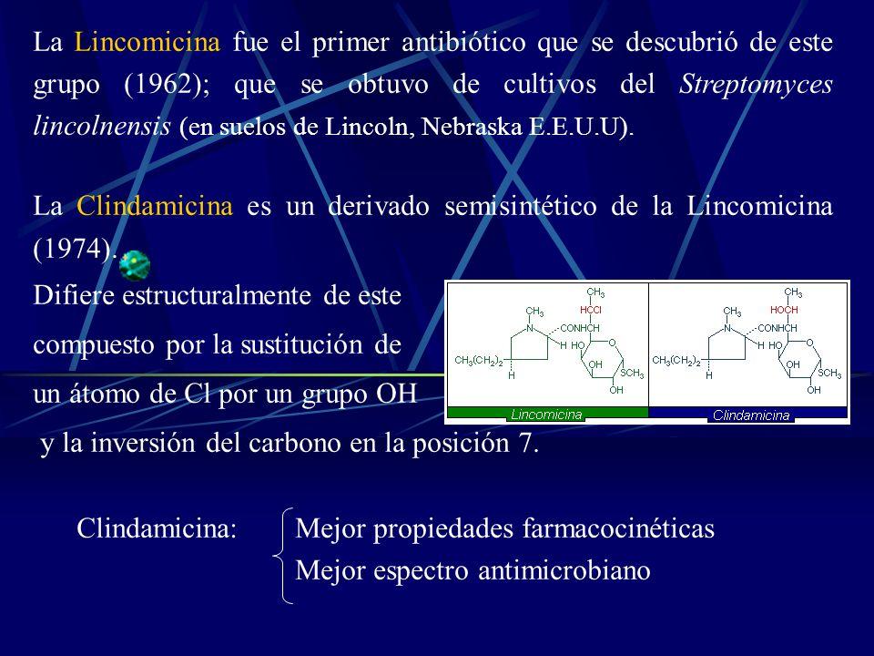 La Lincomicina fue el primer antibiótico que se descubrió de este grupo (1962); que se obtuvo de cultivos del Streptomyces lincolnensis (en suelos de Lincoln, Nebraska E.E.U.U).
