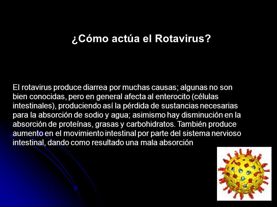 ¿Cómo actúa el Rotavirus