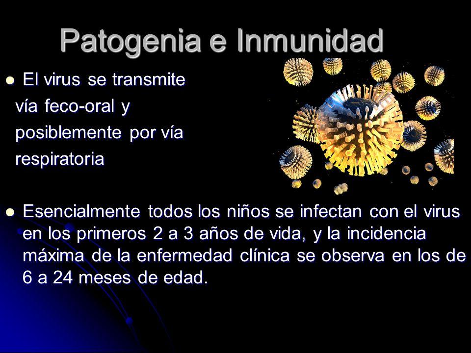 Patogenia e Inmunidad El virus se transmite vía feco-oral y