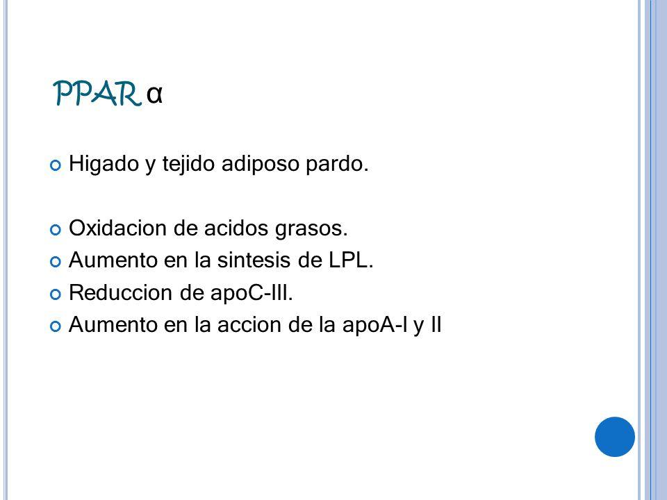 PPAR α Higado y tejido adiposo pardo. Oxidacion de acidos grasos.