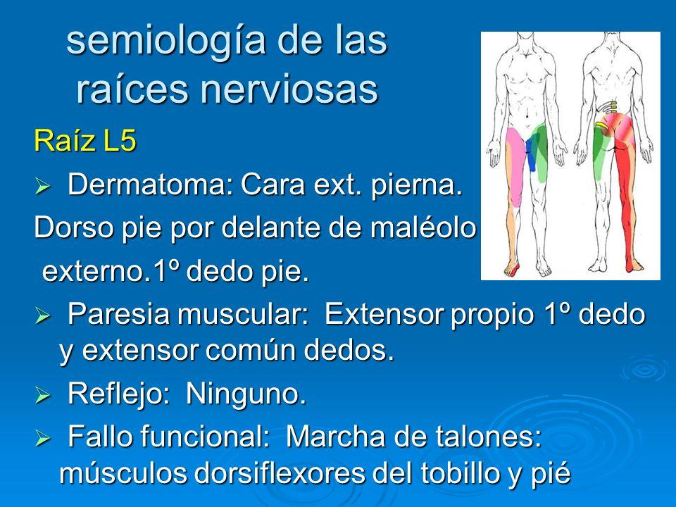 semiología de las raíces nerviosas