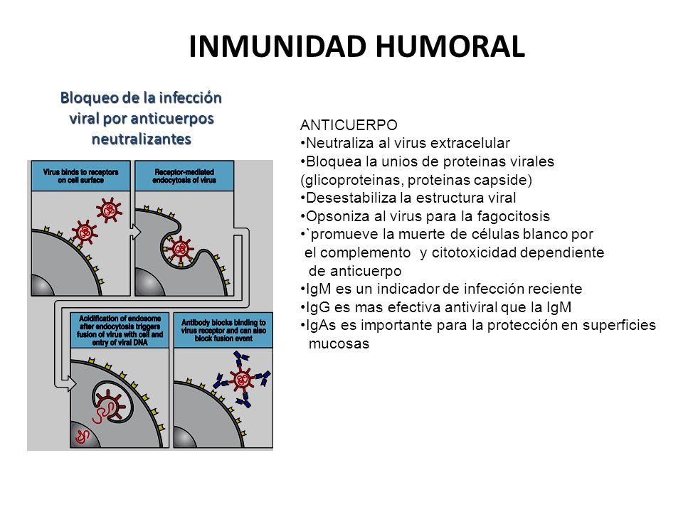 Bloqueo de la infección viral por anticuerpos neutralizantes