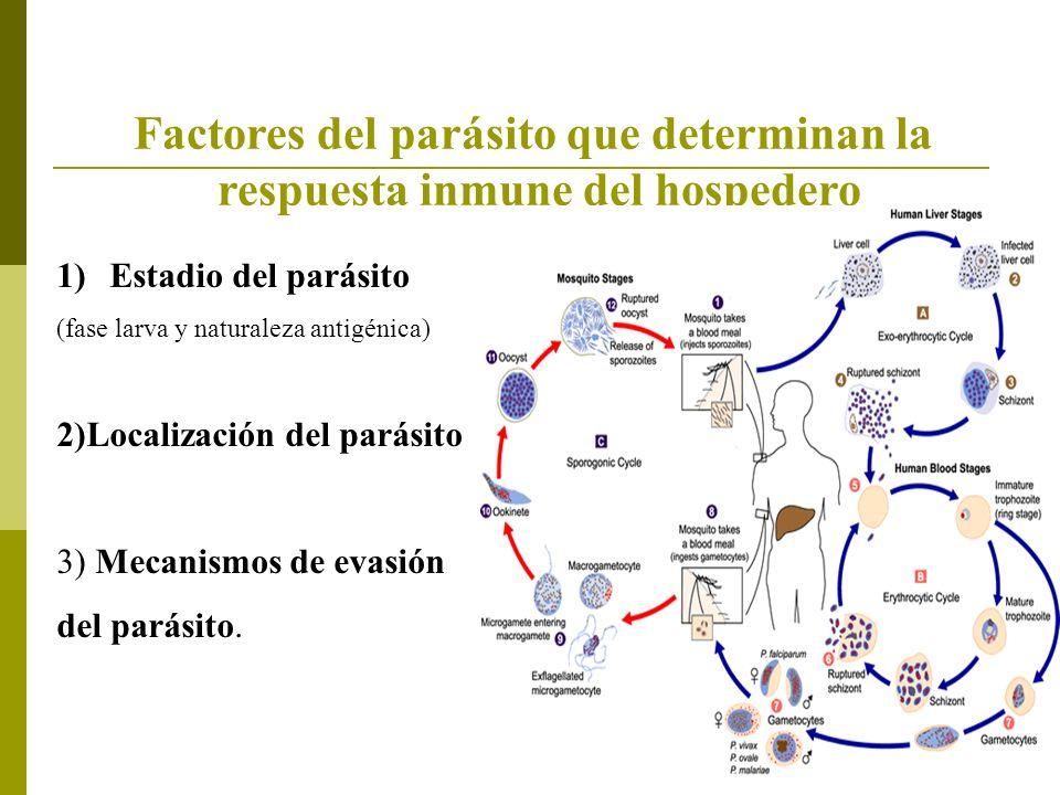 Factores del parásito que determinan la respuesta inmune del hospedero