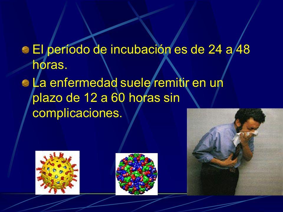 El período de incubación es de 24 a 48 horas.