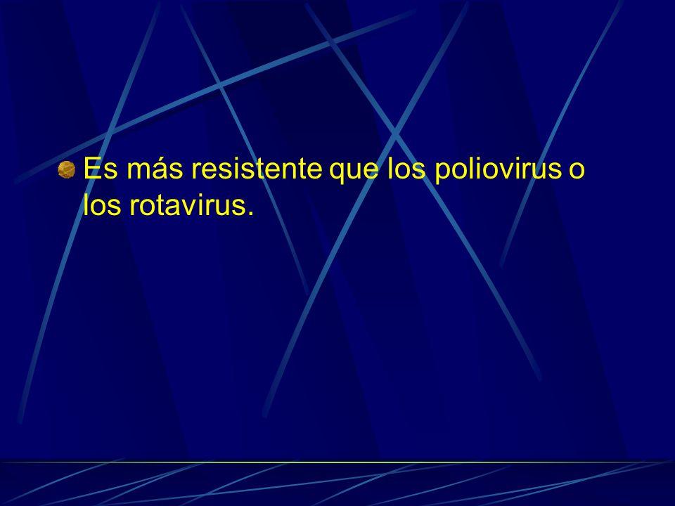 Es más resistente que los poliovirus o los rotavirus.