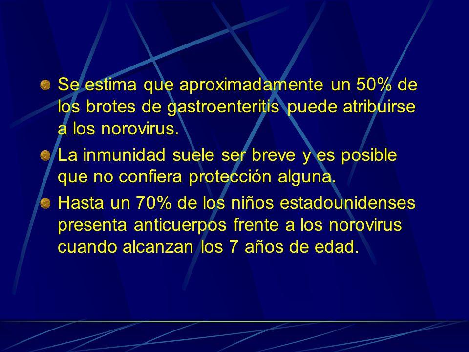 Se estima que aproximadamente un 50% de los brotes de gastroenteritis puede atribuirse a los norovirus.