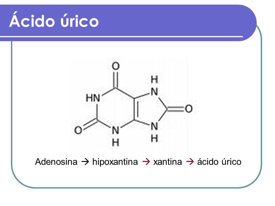 Ácido úrico Adenosina  hipoxantina  xantina  ácido úrico