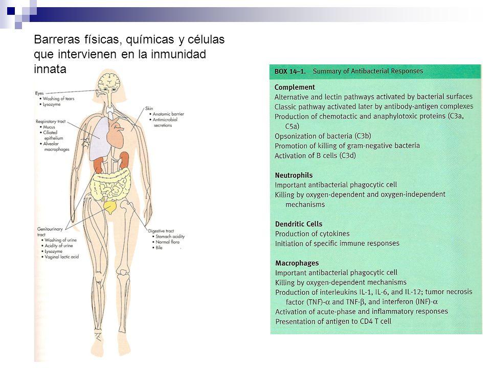 Barreras físicas, químicas y células