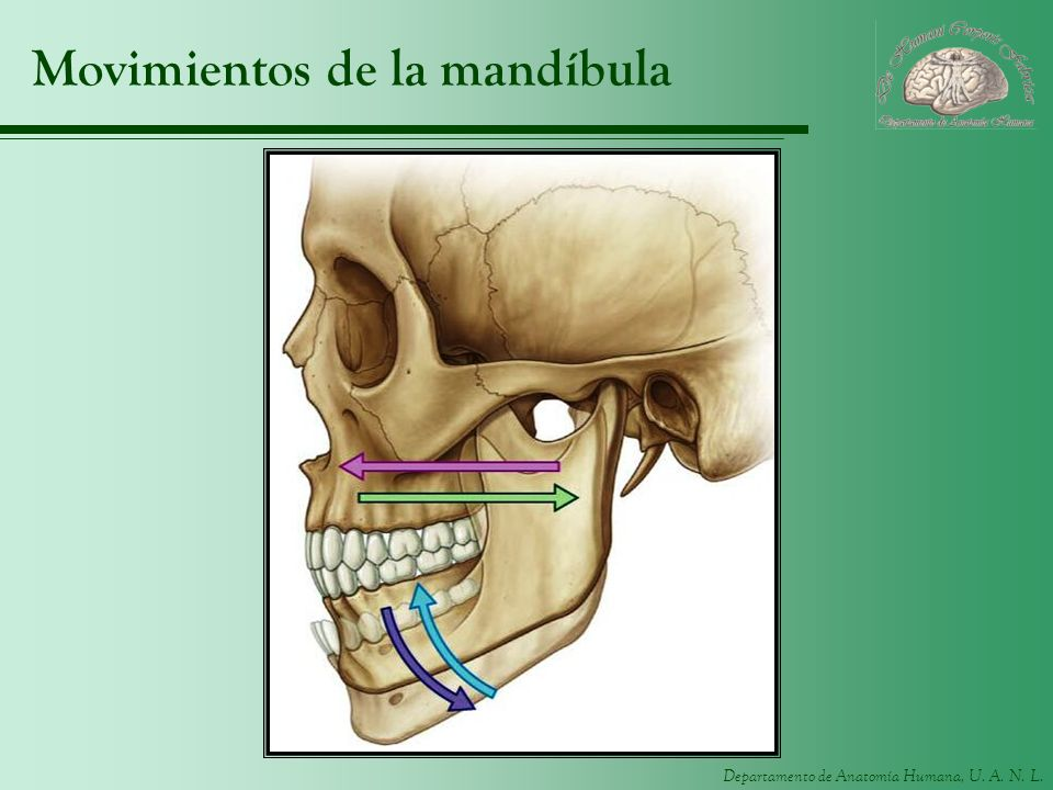 Movimientos de la mandíbula
