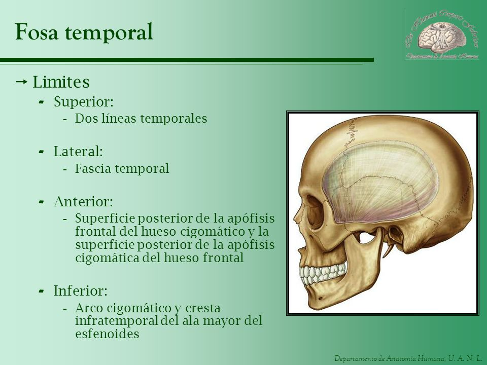 Fosa temporal Limites Superior: Lateral: Anterior: Inferior:
