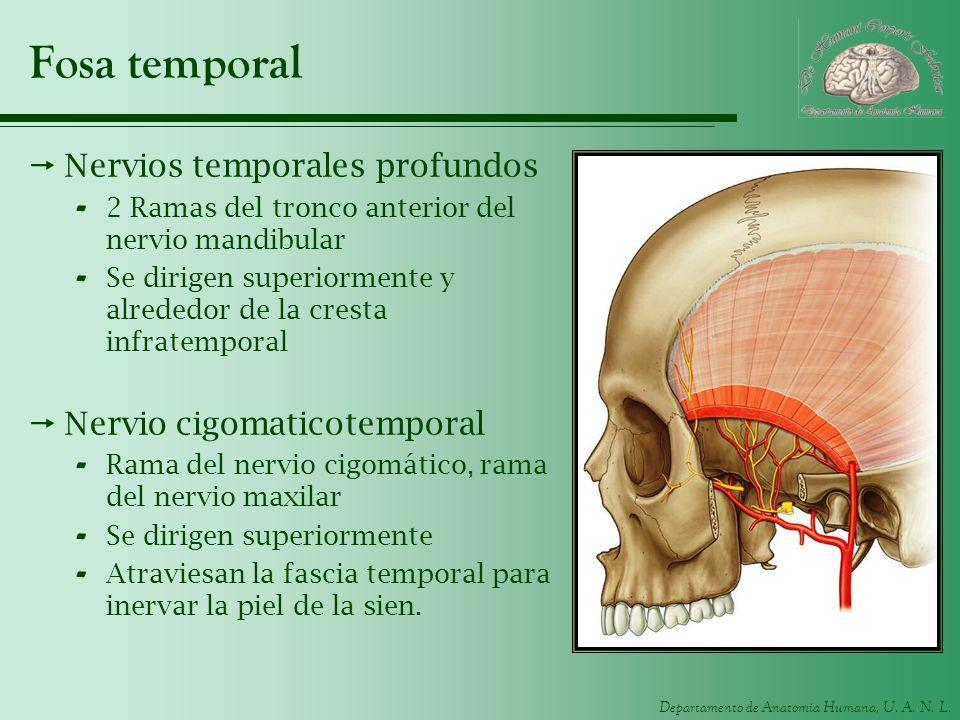 Fosa temporal Nervios temporales profundos Nervio cigomaticotemporal