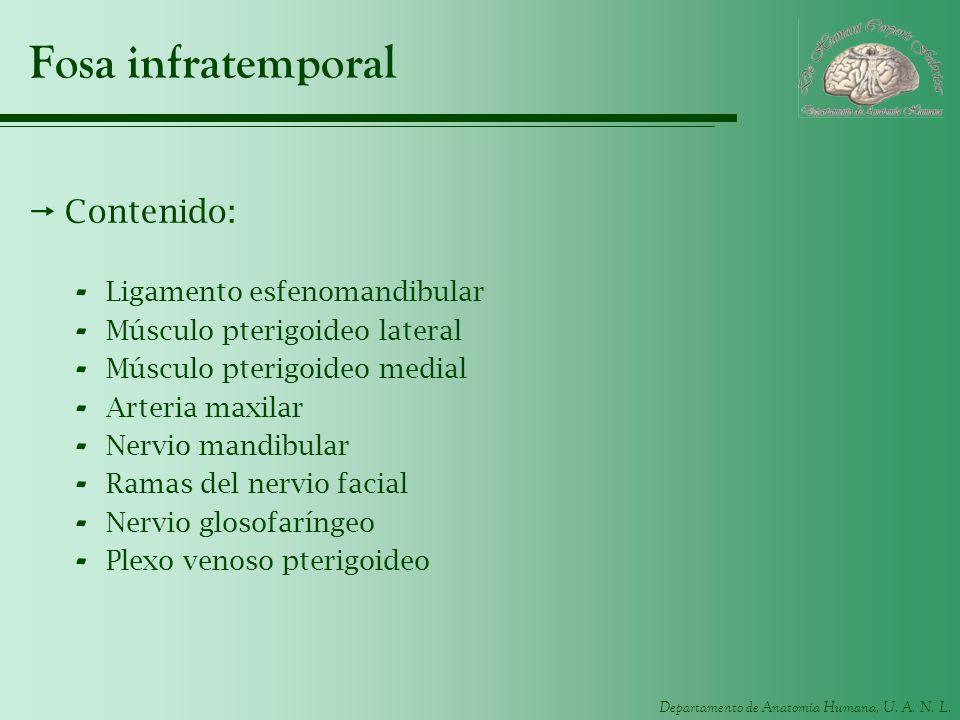 Fosa infratemporal Contenido: Ligamento esfenomandibular
