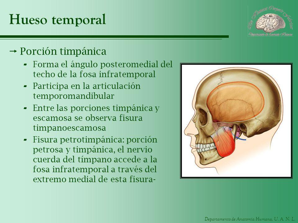 Hueso temporal Porción timpánica