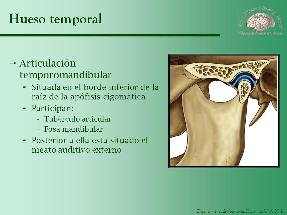 Hueso temporal Articulación temporomandibular