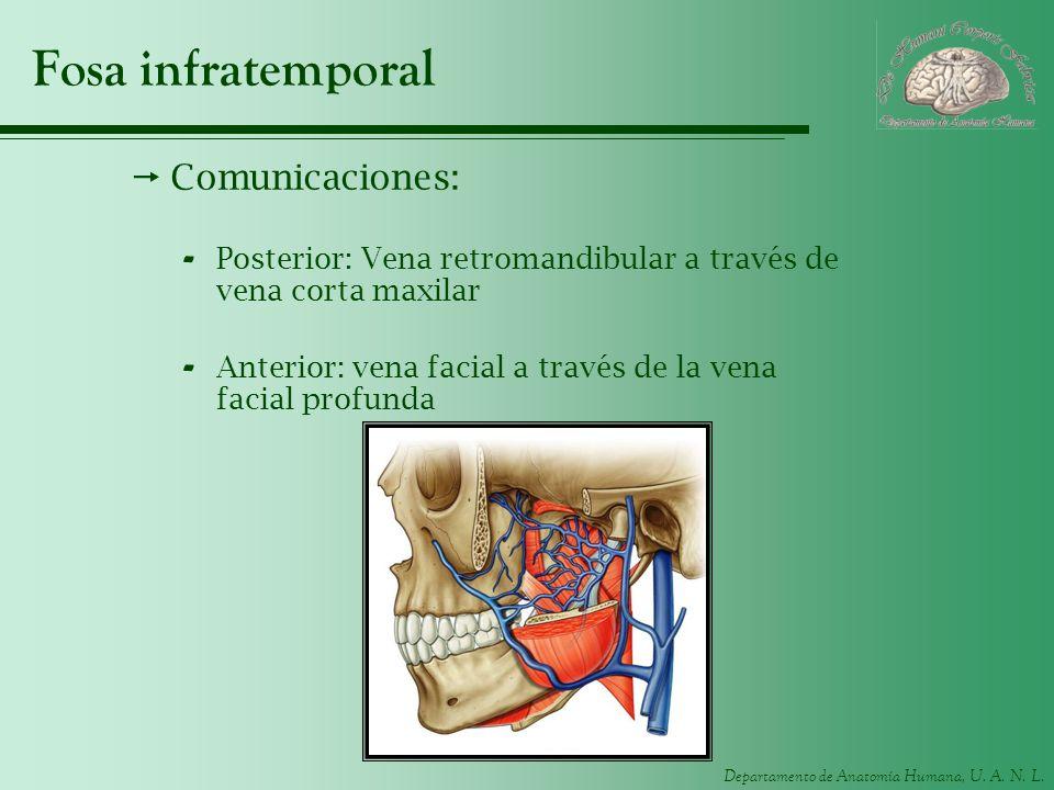 Fosa infratemporal Comunicaciones: