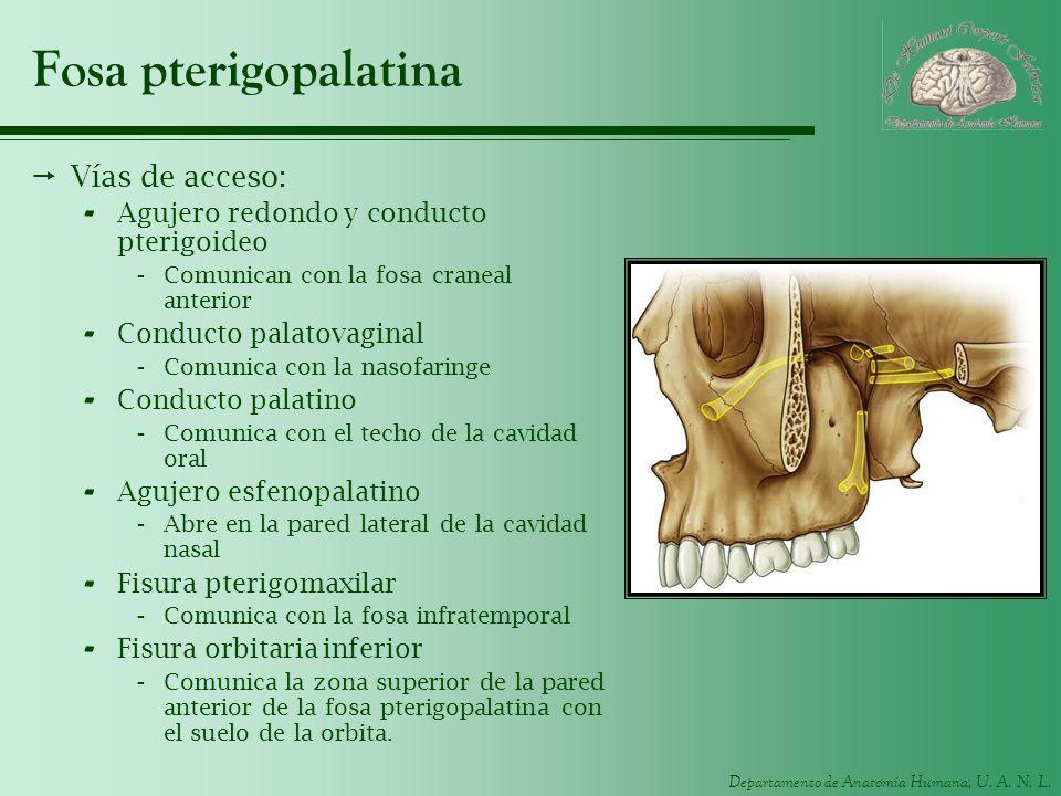Fosa pterigopalatina Vías de acceso: