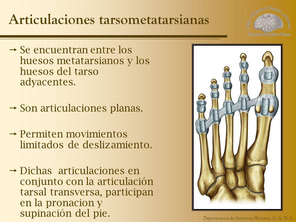 Articulaciones tarsometatarsianas
