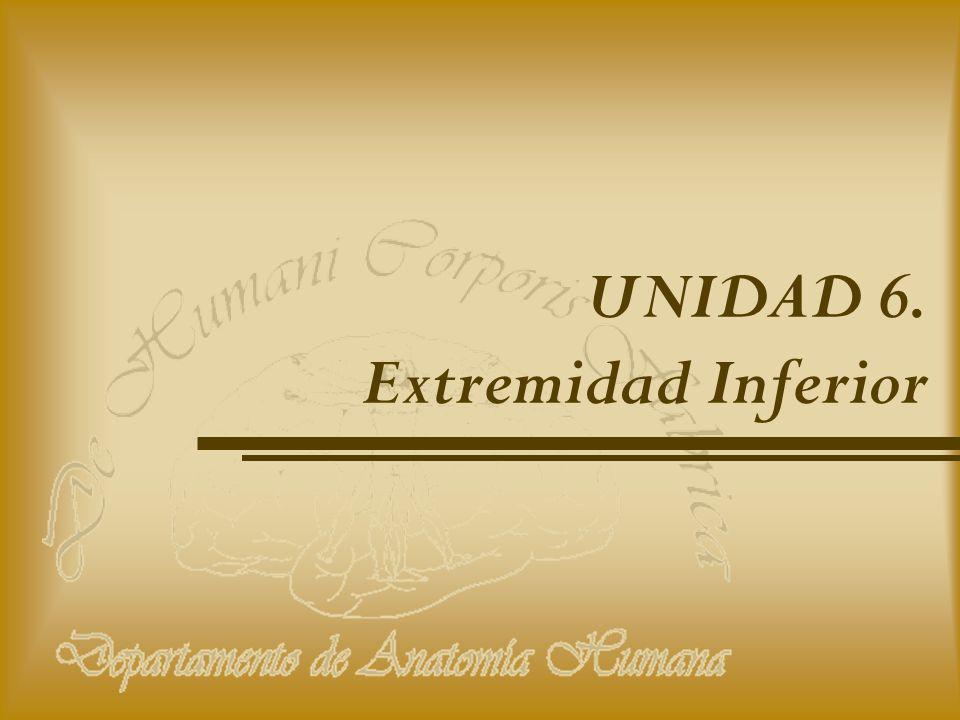 UNIDAD 6. Extremidad Inferior