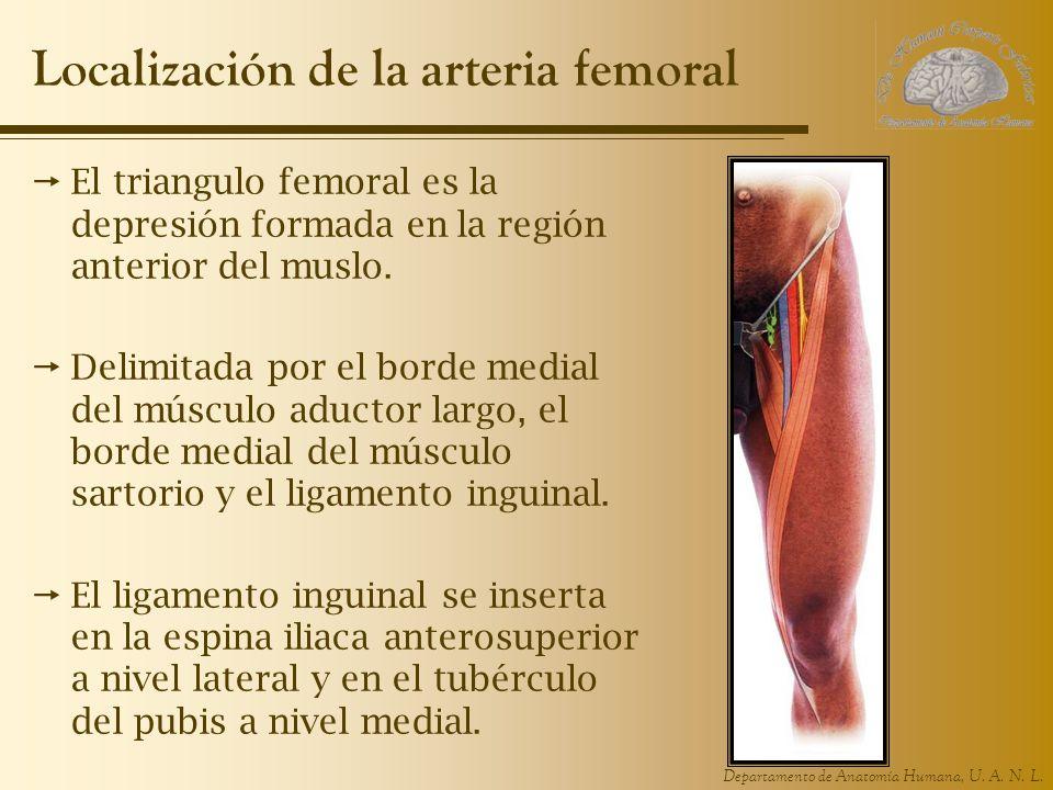 Localización de la arteria femoral