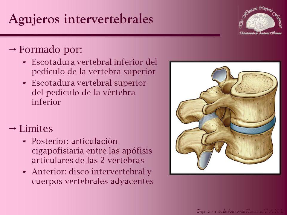 Agujeros intervertebrales