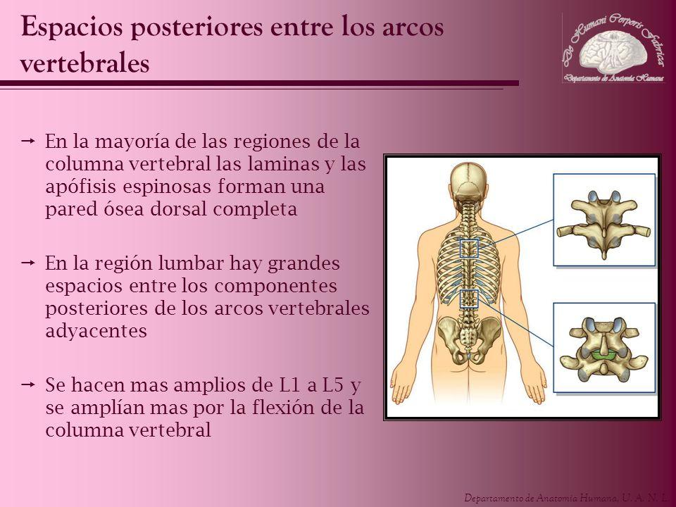 Espacios posteriores entre los arcos vertebrales