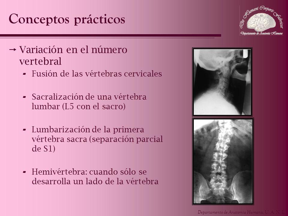 Conceptos prácticos Variación en el número vertebral