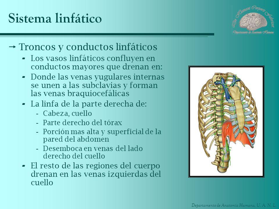 Sistema linfático Troncos y conductos linfáticos