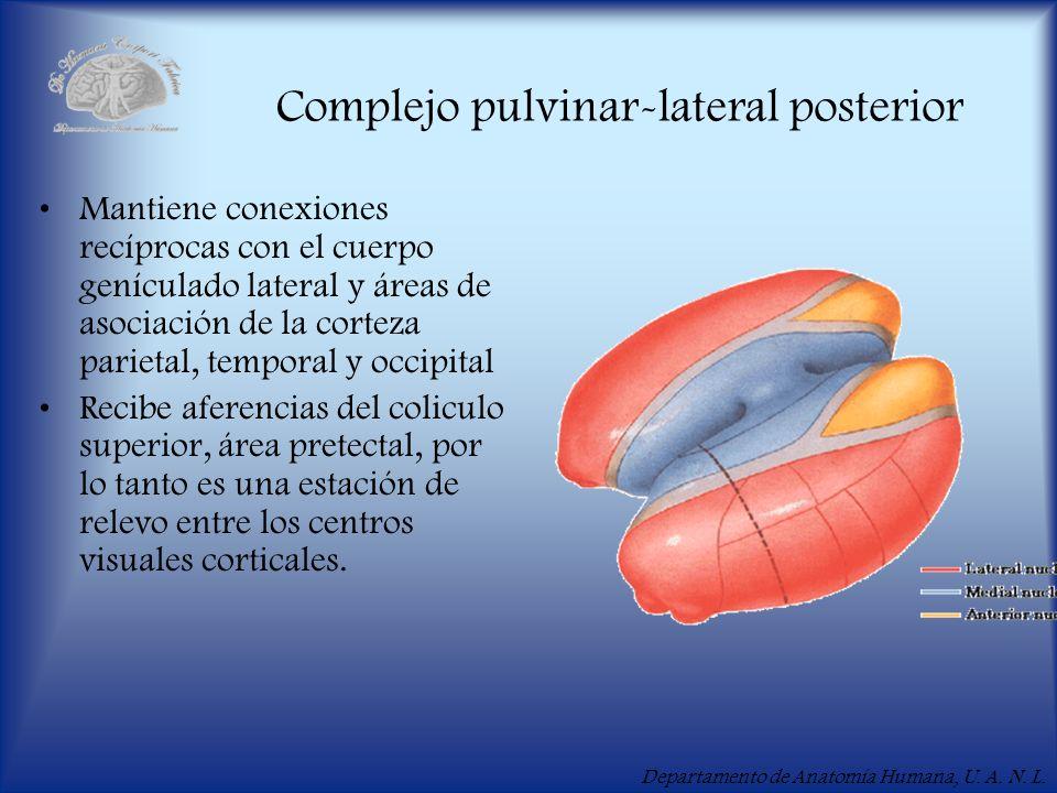 Complejo pulvinar-lateral posterior