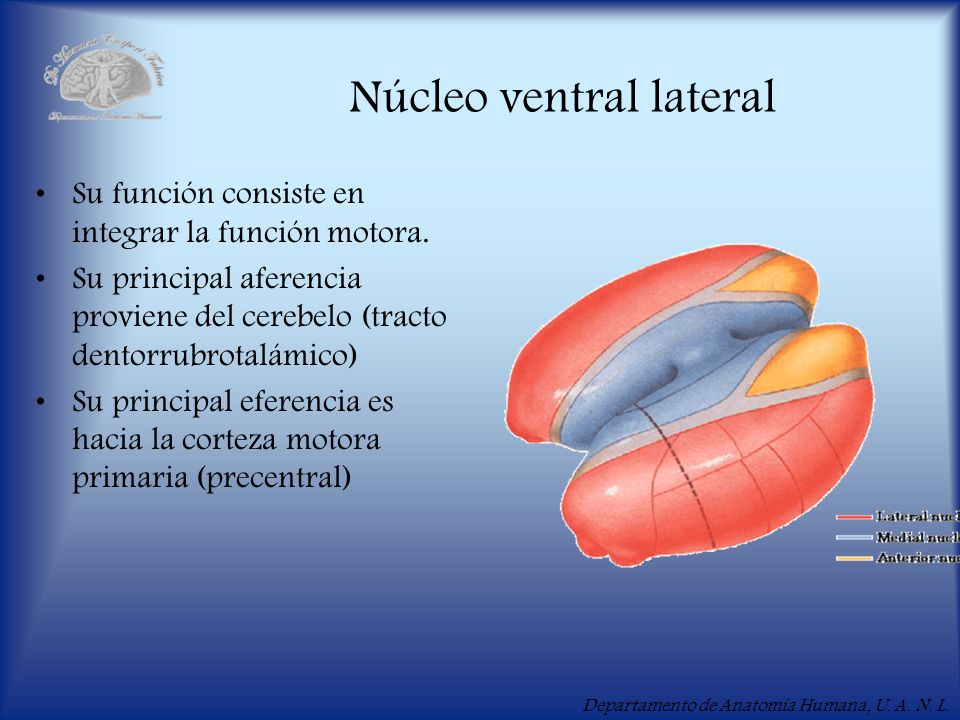 Núcleo ventral lateral