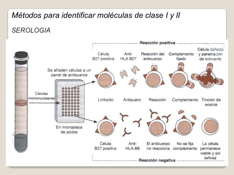Métodos para identificar moléculas de clase I y II