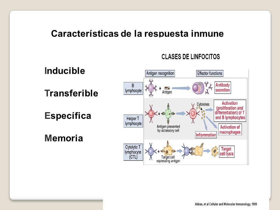 Características de la respuesta inmune