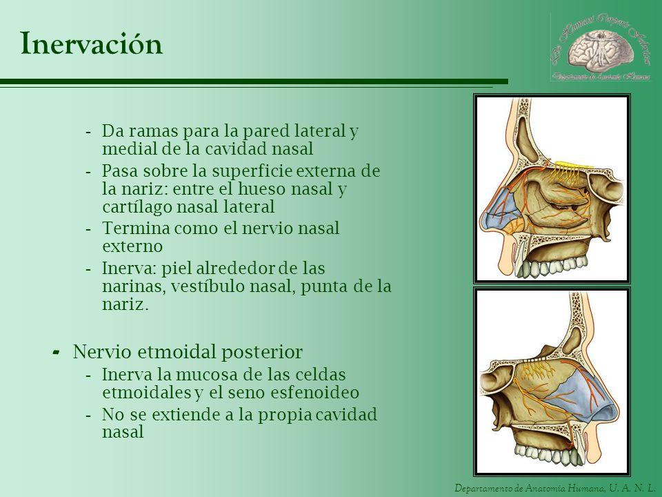 Inervación Nervio etmoidal posterior