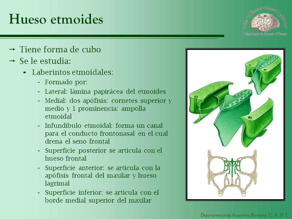 Hueso etmoides Tiene forma de cubo Se le estudia: