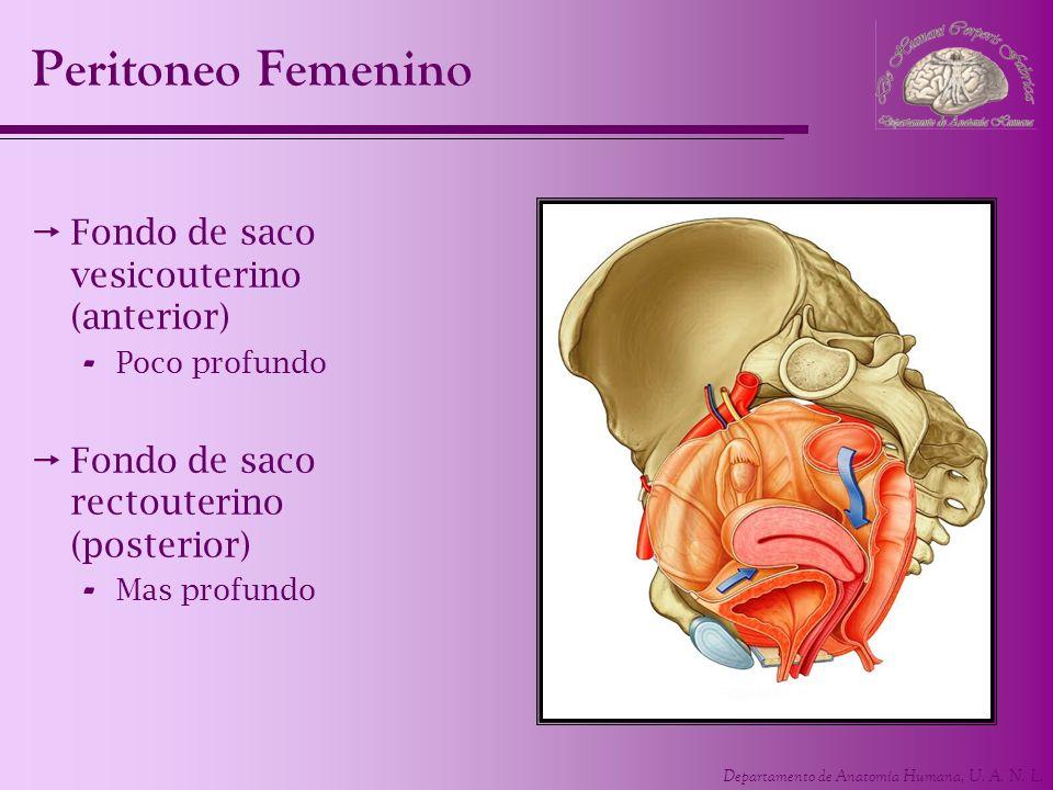Peritoneo Femenino Fondo de saco vesicouterino (anterior)