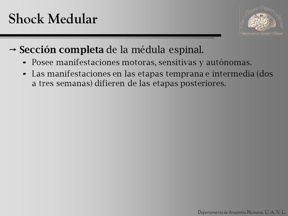 Shock Medular Sección completa de la médula espinal.