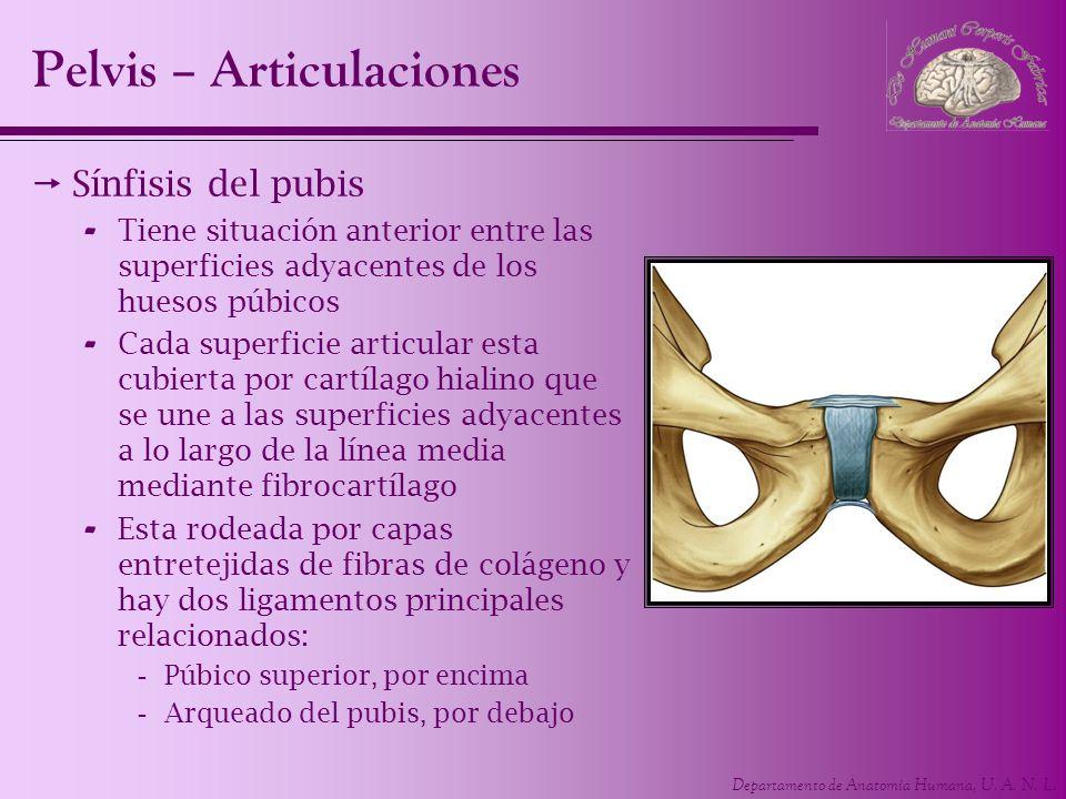 Contemporáneo Anatomía De Superficie De Pelvis Foto - Imágenes de ...