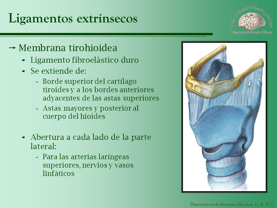 Ligamentos extrínsecos