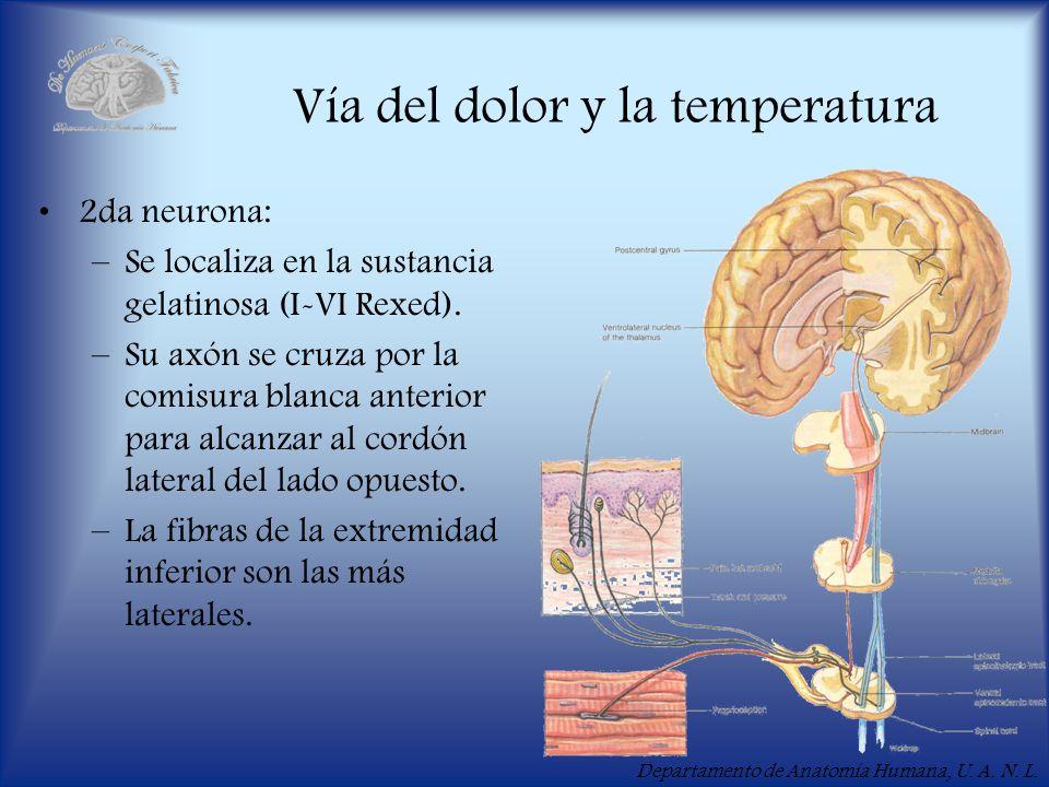 Vía del dolor y la temperatura