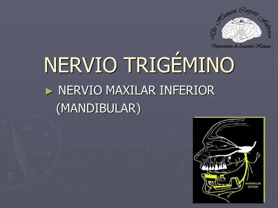 NERVIO MAXILAR INFERIOR (MANDIBULAR)