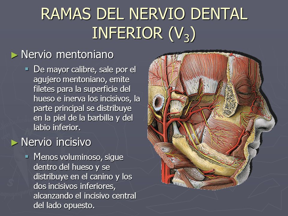 RAMAS DEL NERVIO DENTAL INFERIOR (V3)