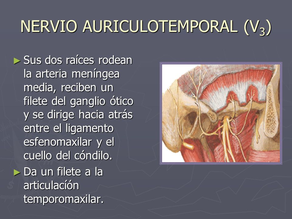 NERVIO AURICULOTEMPORAL (V3)