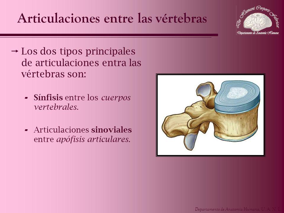 Articulaciones entre las vértebras